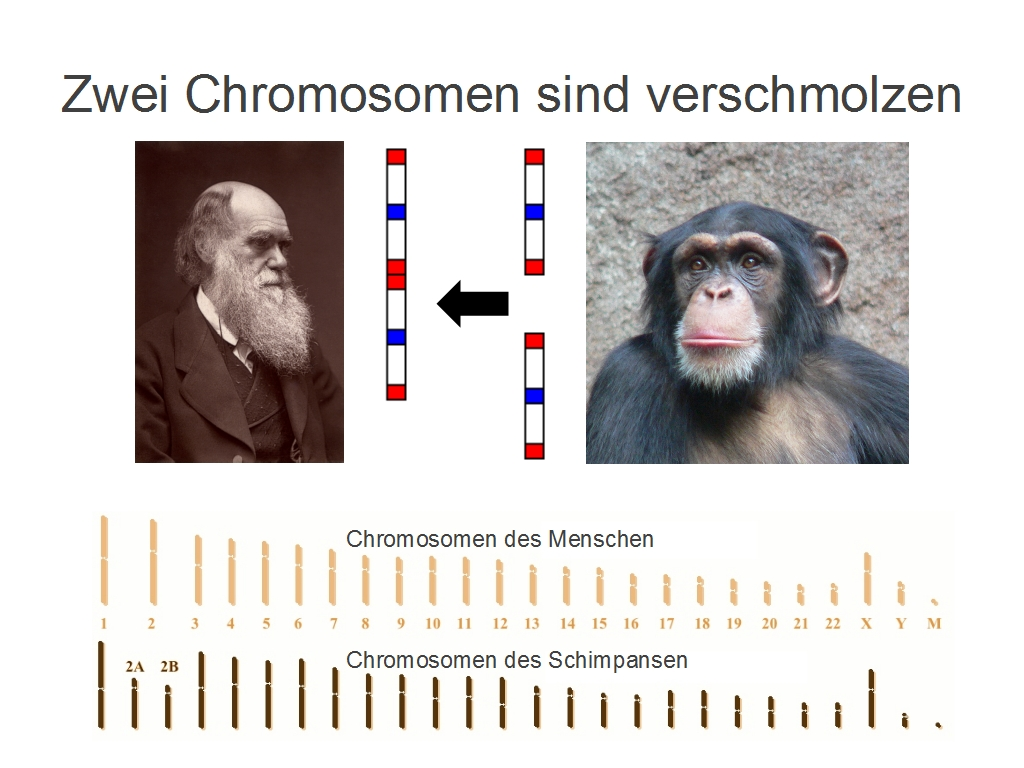 Schöpfung Vs Evolution